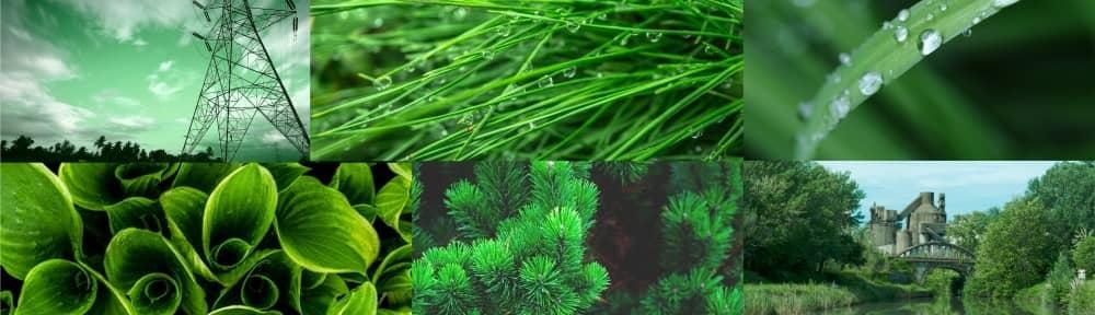A zöld színe